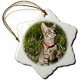 3dRose orn_89215_1 Grey Tabby Kitten, Cat, Florida US10 MPR0238 Maresa Pryor Snowflake Porcelain Ornament, 3-Inch