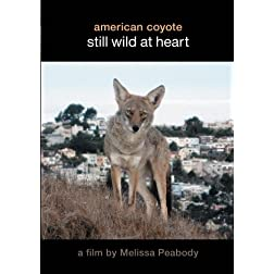 American Coyote:  Still Wild At Heart