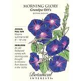 Morning Glory Grandpa Ott's