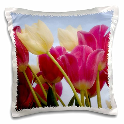 Danita Delimont - Flowers - Detail of tulips - NA01 BJA0110 - Jaynes Gallery - 16x16 inch Pillow Case (pc_83331_1)