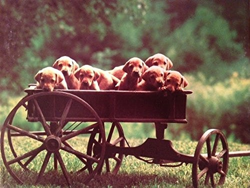 "Springbok ""Waggin' Load of Pups"" 500 Piece Jigsaw Puzzle"