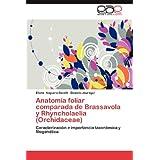 Anatomía foliar comparada de Brassavola y Rhyncholaelia (Orchidaceae): Caracterización e importancia taxonómica...