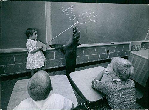 Vintage Foto Di Giorni Sono Ancora Qui, Ma in questa scuola (Hoover scuola, Mason City, jowa) sembra school-days hanno trasformato in Seal giorni. Guarnizione in classe con gli studenti. 1962