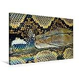 Premium Textil-Leinwand 75 cm x 50 cm quer, Gefährliche Schlangen -  Der Netzpython (2) | Wandbild, Bild auf Keilrahmen, Fertigbild auf echter ... und ewigem Leben. (CALVENDO Tiere)