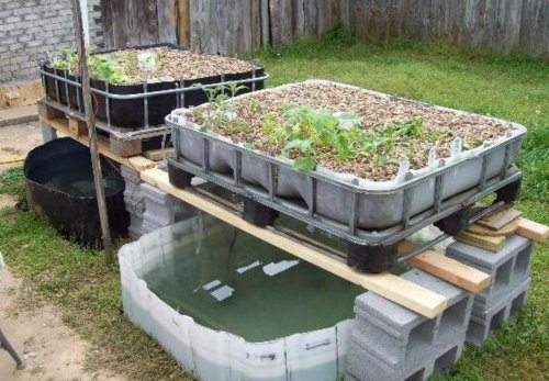 All In One Aquaponics System Superponic Amp Hydroponic Systems