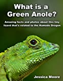 What is a Green Anole? - Amazing facts and photos about this tiny lizard thats related to the Komodo Dragon