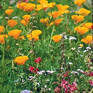 Native Pacific Northwest Wildflower Seed Mix - 1/4 LB