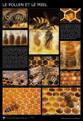 Affiche pollen et miel