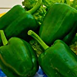 Biocarve Capsicum Green - Pack of 50 seeds