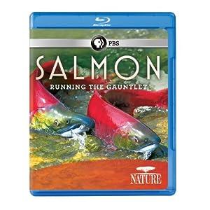 Nature: Salmon [Blu-ray] [Import]