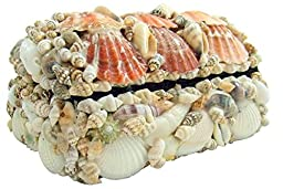 Real Natural Seashell Jewelry Trinket Box Nautical Sea Shell Beach Home Decoration Gift 6 Inches Long