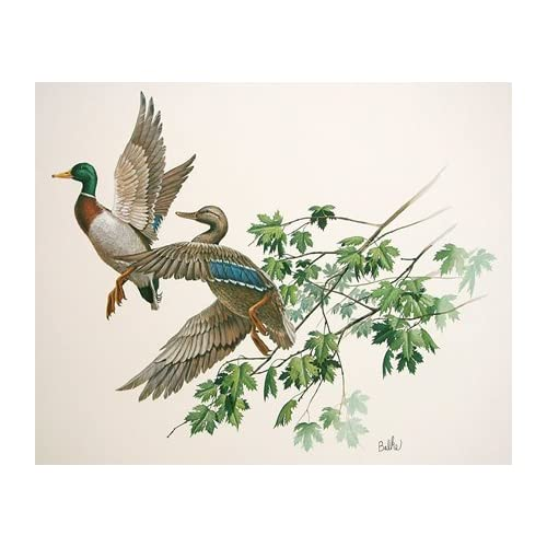 Amazon.com: Mallards, Duck, art print by Don Balke: Artwork: Posters