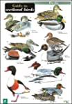 A Guide to Wetland Birds (Occasional...