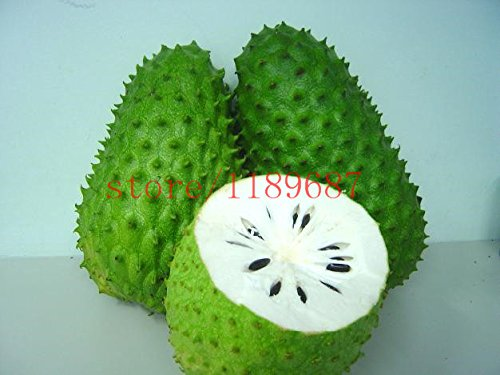20 pcs SOURSOP Graviola Guanabana Annona muricata SEEDS Tropical Fruit NO-GMO good for health (Graviola Fruit compare prices)
