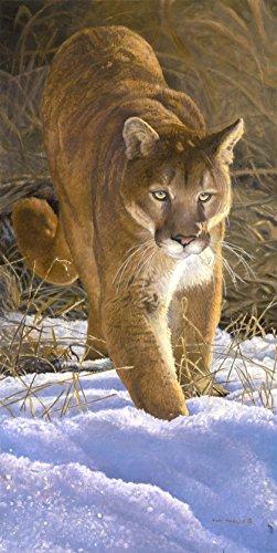 Royal Plush Raschel Mountain Lion Cougar Eye on the Prize Throw Blanket 50 X 60 Inches