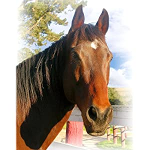 Giclee Thoroughbred Horse Photographic Poster