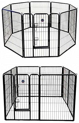 Indoor Dog Play Area