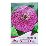 Zinnia Elegans Seeds of 500, Flower Seed, Vegetable Seed, Herb Seed, Melon Seed (youth-and-old-age)