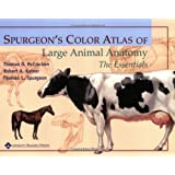 Spurgeon's Color Atlas of Large Animal Anatomy: The Essentialsby Thomas O. McCracken