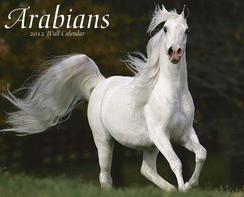 Arabians 2012 Calendar