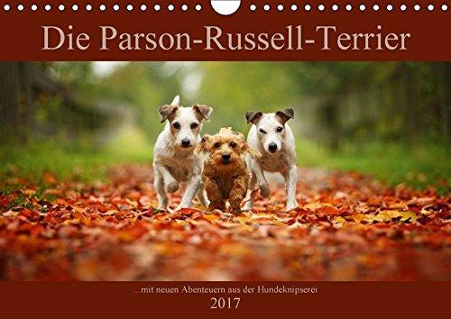 die-parson-russell-terrier-mit-neuen-abenteuern-aus-der-hundeknipserei-wandkalender-2017-din-a4-quer