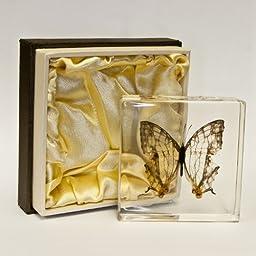 Clear Butterfly in Acrylic Block