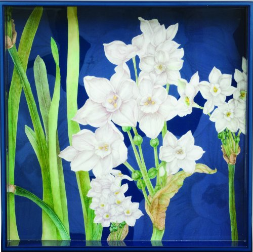 Rockflowerpaper Paperwhites Lacquer Serving Tray, Square, 15-Inches, 1-Count