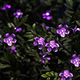 Innoo Tech Solar Outdoor String Lights 21ft 50 LED Purple Blossom Christmas Lights for Bedroom,Garden,Walkway