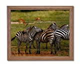 African Zebra Herd Wildlife Home Decor Wall Picture Oak Framed Art Print