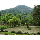 As águas que curam em Minas Gerais