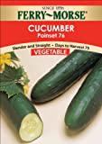 Ferry-Morse Seeds 1278 Cucumber - Poinsett 76 3 Gram Packet