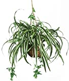 Nearly Natural 6607 Spider Hanging Basket Decorative Silk Plant, Green Sale
