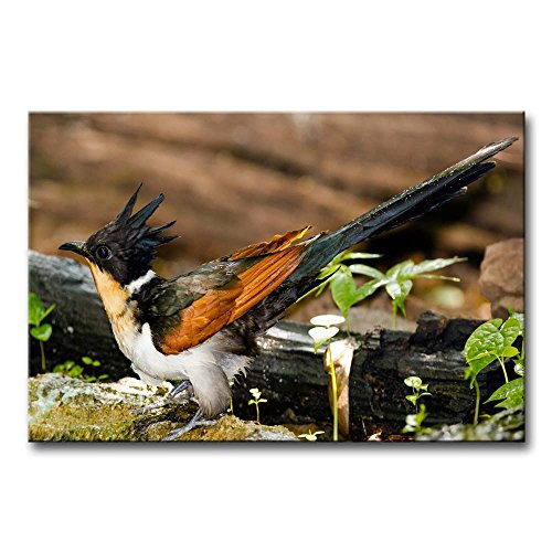 Wall Art Painting Chestnut-Winged Cuckoo Pictures Prints On Canvas Animal The Picture Decor Oil For Home Modern Decoration Print For Furniture