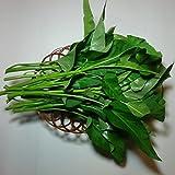 エンサイ(空芯菜)