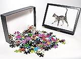 Photo Jigsaw Puzzle of JD-22971 KITTEN -...