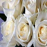 バラ 造花 50個 セット 結婚 式 の 手づくり アレンジ フラワー に 白
