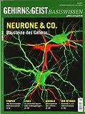 Neurone & Co.: Bausteine des Gehirns