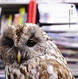 梟(初回限定盤A)(DVD付)