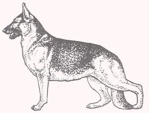 Dog Rubber Stamp - German Shepherd-1F (Size: 3