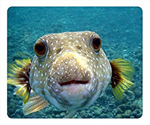 Share qty 1 2 3 4 5 6 7 8 for Amazon puffer fish