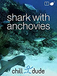 Shark with Anchovies Underwater Nature Video