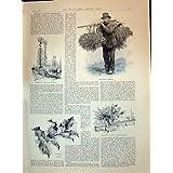Impresión Antigua del Paraguas Que Camina 1894 de las Señoras del Acebo de los Árboles de Álamos de Francia Apple...
