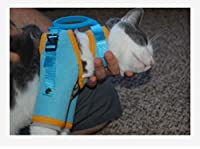Cat Grooming Harness, Cat Restraint, Cat Grooming Restraint, adjustable for Cat Care, Cat Nail Trimming, Cat Bathing, SubQ. Fluids, Ear Cleaning, Eye Cleaning, & Giving Cats Medication ...