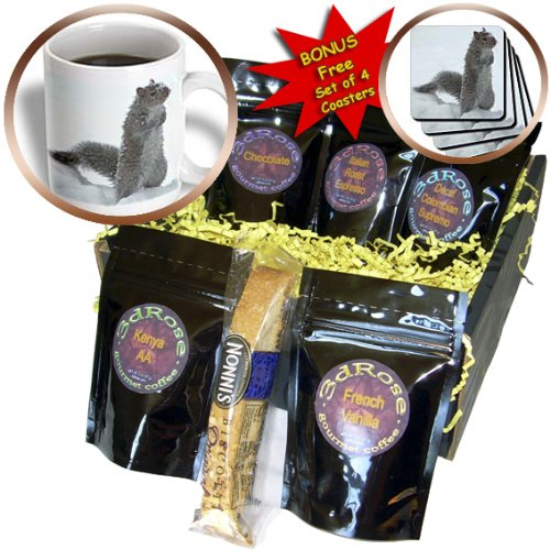 cgb_12329_1 Beverly Turner Photography – Cute Squirrel in the Snow – Coffee Gift Baskets – Coffee Gift Basket