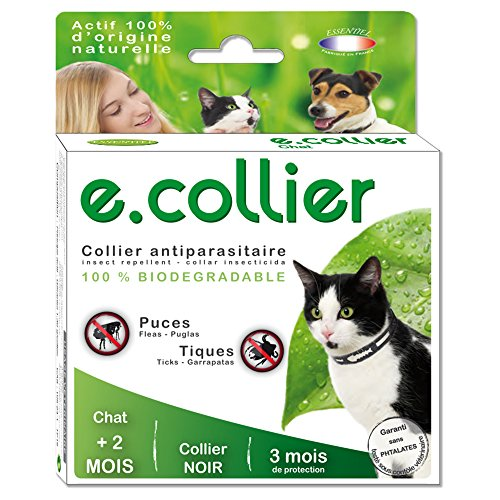 agecom-ecollier-chat