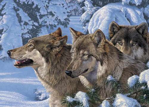 Wolves of Winter - 1