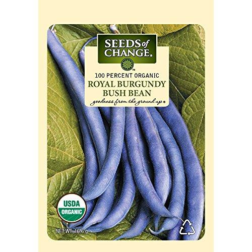 Seeds of Change S14980 Certified Organic Royal Burgundy Bush Bean
