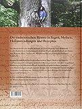 Image de Blätter von Bäumen: Heilkraft und Mythos einheimischer Bäume