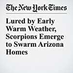 Lured by Early Warm Weather, Scorpions Emerge to Swarm Arizona Homes | Fernanda Santos