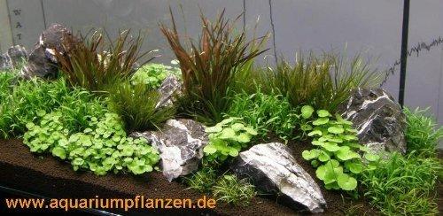 Aquarienpflanzen-Set-fr-250-300-l-Aquarium-17